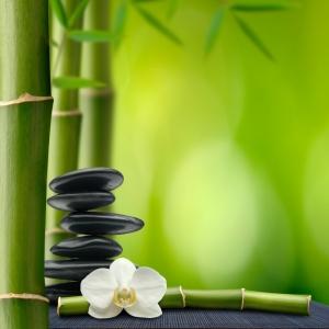 bamboo_stones.4165256_std